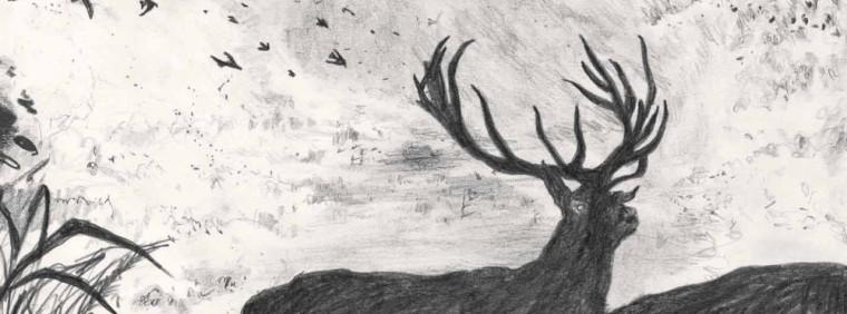 Paz Boira - Les animaux de distance - bandeau